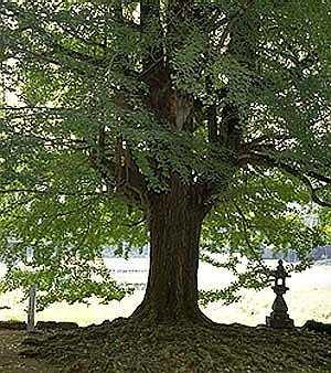 YAKUNO-arbre