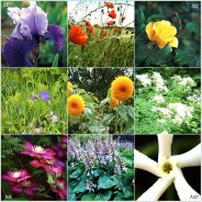 Des couleurs dans mon Jardin Feng-Shui