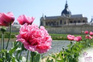 Le Potager du Roi à Versailles - Juin 2015